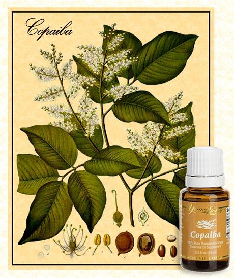 eCopaiba-Botanical